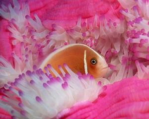 Gambar Ikan Laut Cantik @ Wisiwic