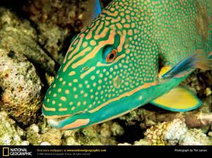 Ikan Tercantik @ Wisiwic