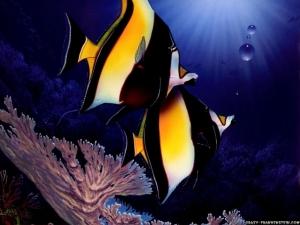 Fish Wallpaper @ Wisiwic