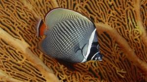 Ikan-Ikan Indah @ Wisiwic