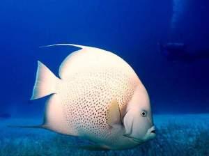 Fish @ Wisiwic